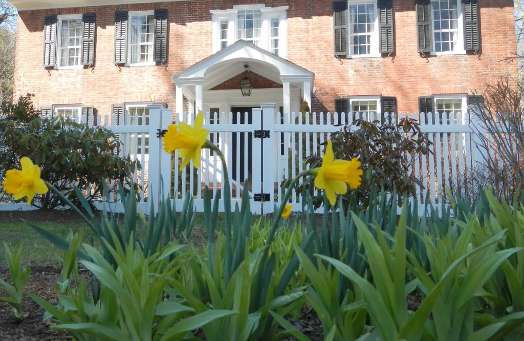 Daffodils emerge in the spring at Country House Bed and Breakfast