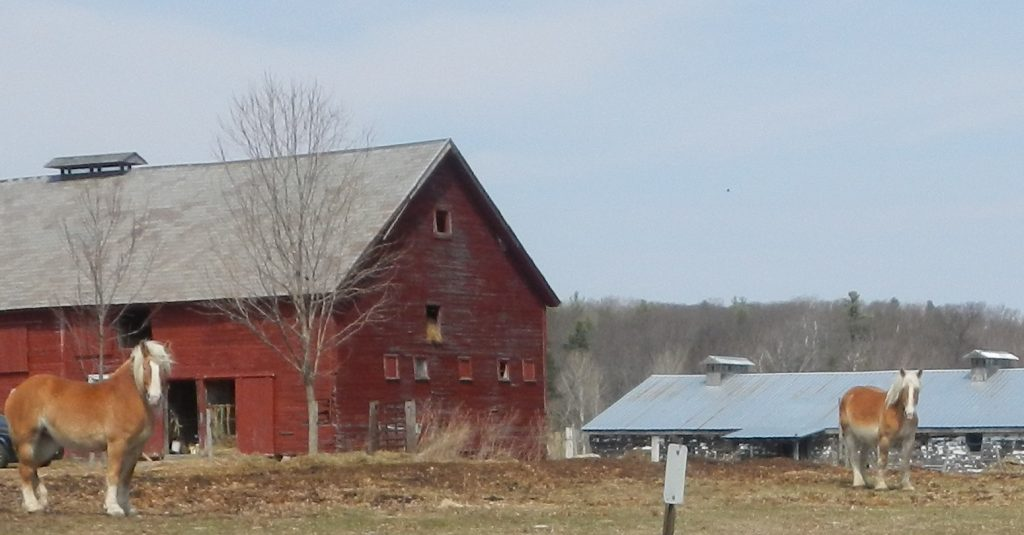 Horse farm properties are popular in Saratoga and the surrounding area