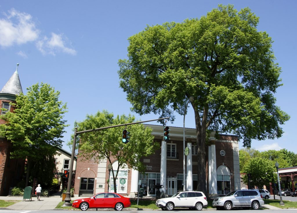 Elm tree in front of the Roohan Building on a beautiful summer day - history and architecture of Saratoga Springs, NY