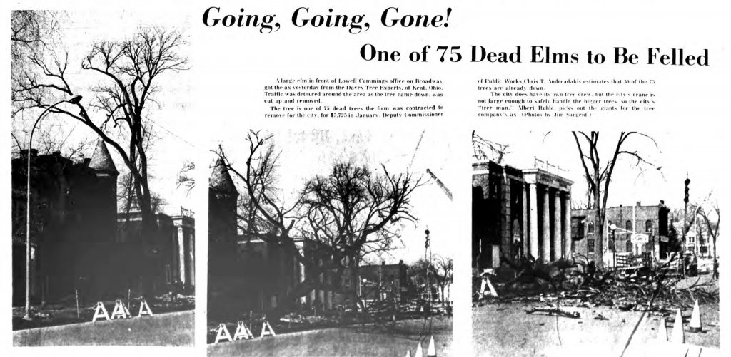 dead elms to be removed saratoga springs ny 1969