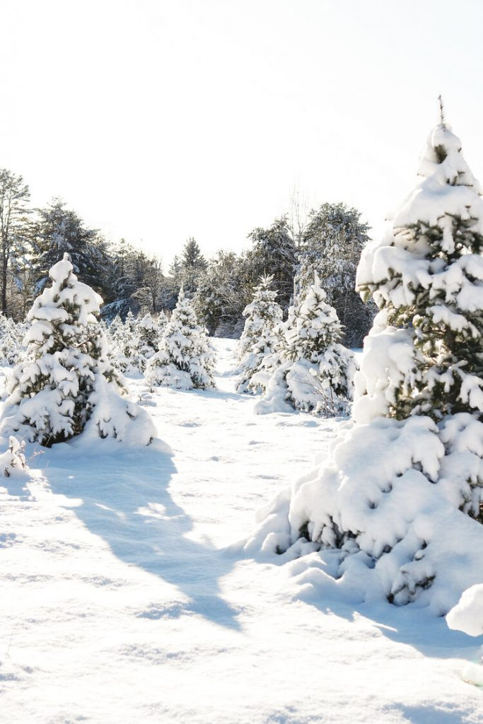 Christmas Tree Farms to Visit