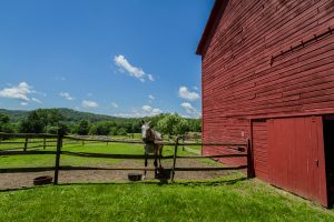 horse farms equestrian properties for sale saratoga county ny