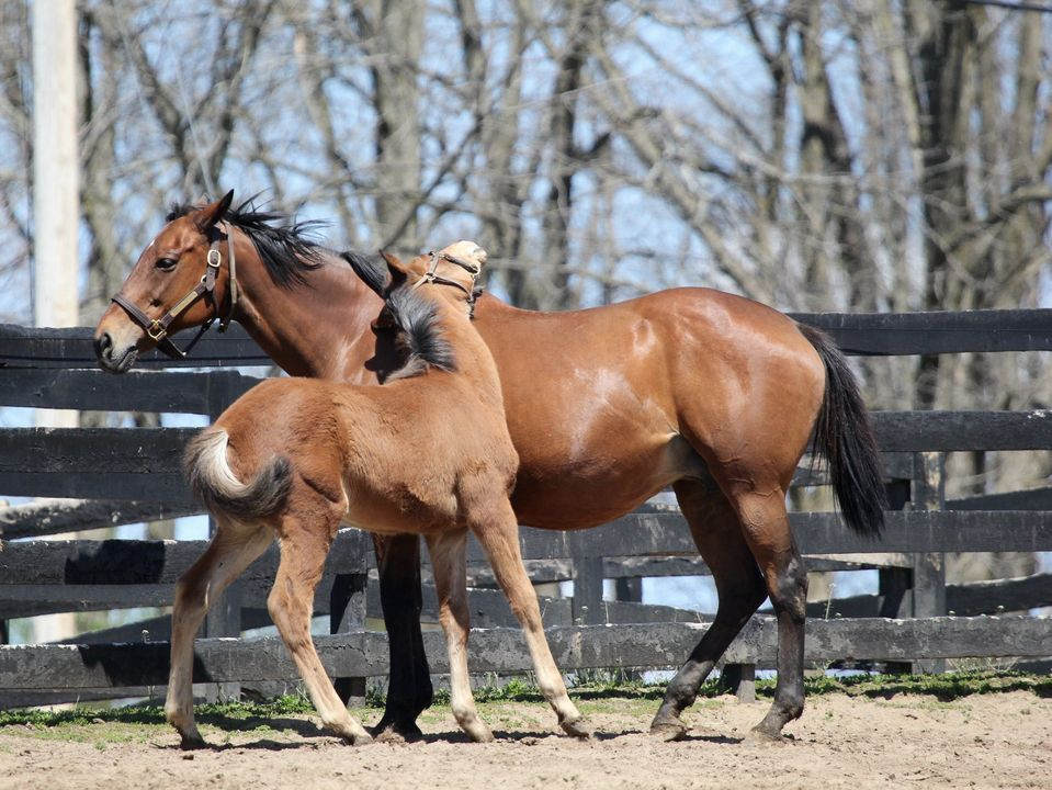 drive through horse farm tour saratoga county 2020